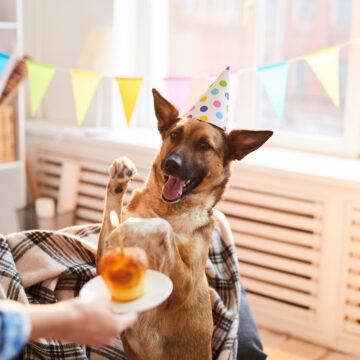 7 av 10 svenskar firar hunden