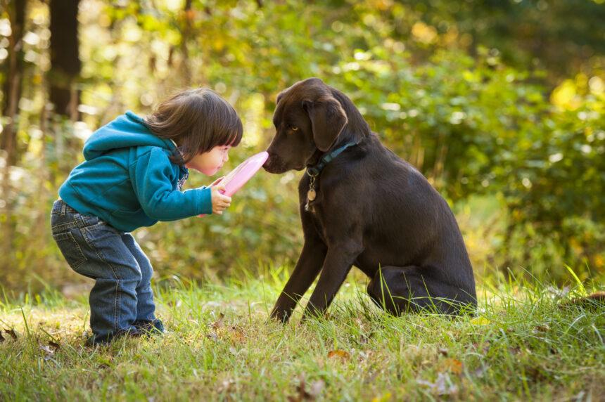 Hunden förstår oss bättre än någon annan