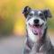 Hjälp hemlösa hundar genom Agria Hundpromenad