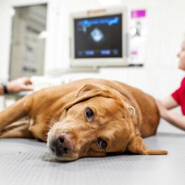 Oförsäkrade hundar riskerar avlivning