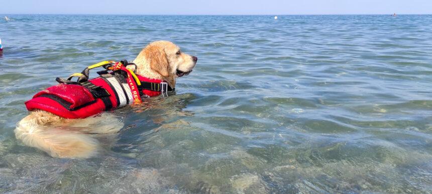 Tre hundar räddade 14 personer