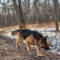 Hundar ska söka efter försvunna i Fyrbodal
