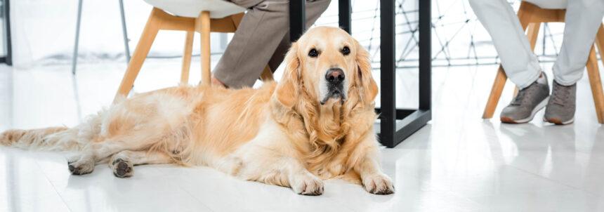Allt fler vill ha med hunden på jobbet