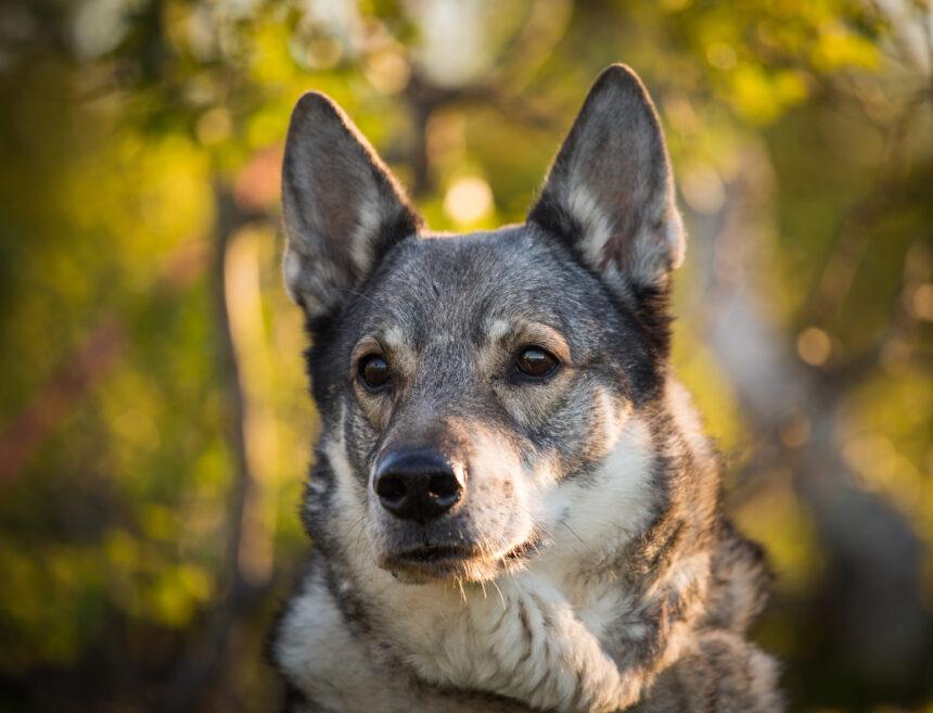Räddade hund från klippavsats