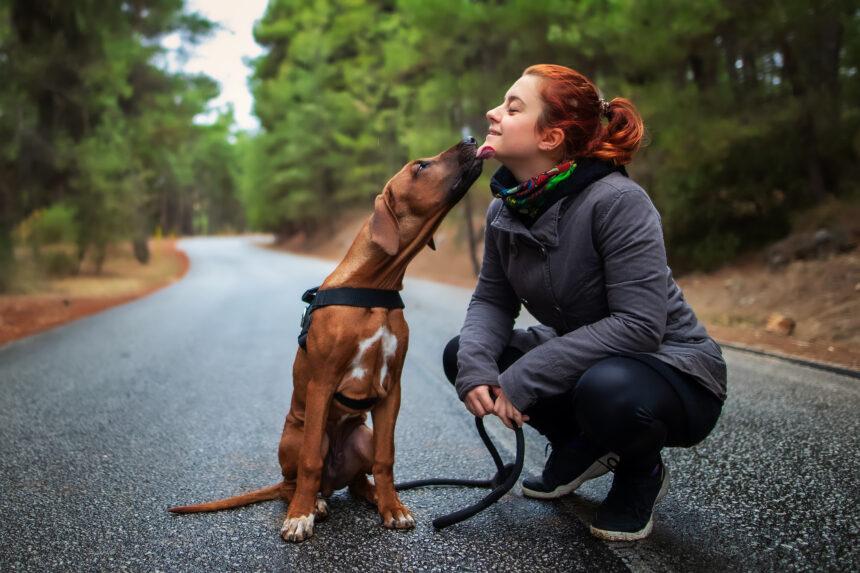 Hundar i fokus på nytt gymnasium