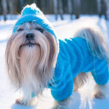 Håll vovven varm i vinter