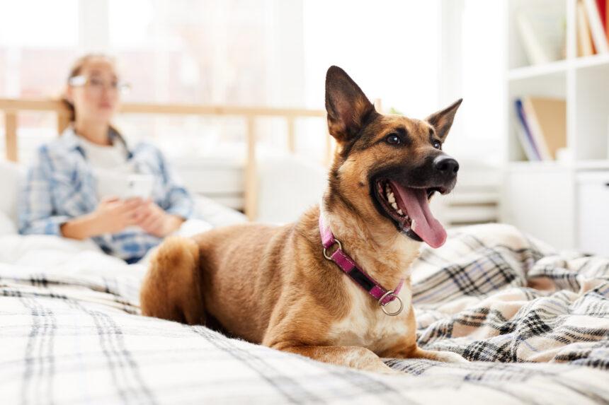 Hund i lägenhet