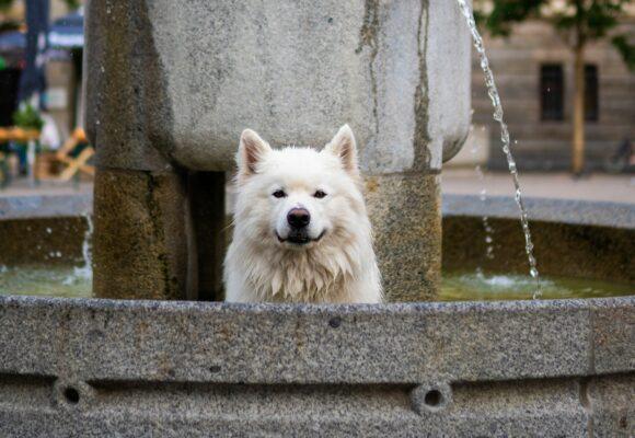 7 städer att besöka med din hund