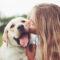 88 % av svenskarna tycker om hundar